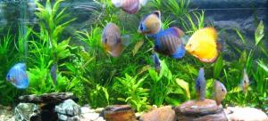 Begini Cara Mendapatkan Penjernih Air Aquarium Terbaik
