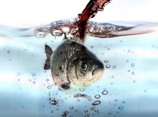 Penyaring Air dan Dampak Lingkungannya