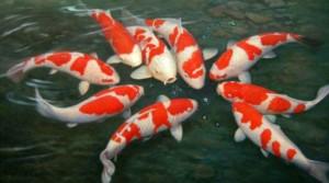 Jenis Ikan Hias Air Tawar dan Penggunaan Penjernih Air