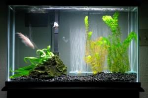 Manfaat Filter Air RO untuk Ikan Hias Air Tawar