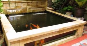 Mengapa Anda Butuh Filter Air Kolam Ikan