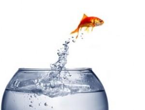 Tips Memilih Filter Air untuk Budidaya Ikan